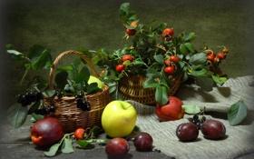 Обои яблоки, шиповник, натюрморт, сливы, арония