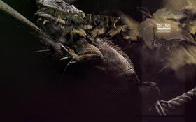 Обои дизайн, надписи, игуана, рептилия