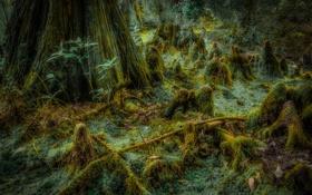 Обои лес, трава, дерево