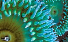 Картинка море, макро, океан, цвет, полипы, актинии, морские анемоны