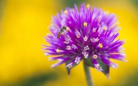 Картинка цветок, природа, краски, лепестки, насекомое