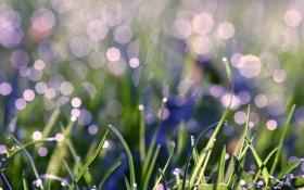 Обои капли, блеск, трава, блики, роса, зелень, вода
