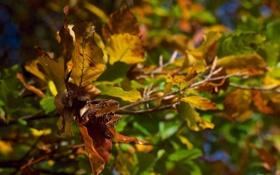 Обои осень, листья, цвета, макро, ветка