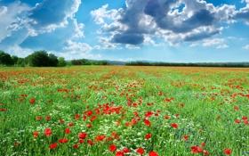 Обои пейзаж, трава, деревья, природа, голубое небо, цветы