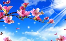 Картинка солнце, лучи, бабочки, цветы, природа, ветви, nature
