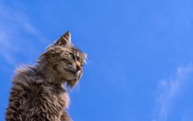 Обои кот, фон, кошак, потрепанный