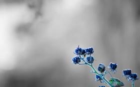 Обои макро, цветы, растение, серый фон