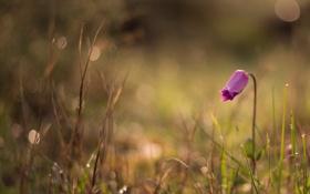 Картинка цветок, трава, природа