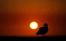 Обои природа, птица, свет
