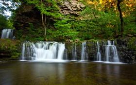 Обои деревья, скалы, водопад, Великобритания, ущелье, папоротник, национальный парк