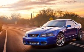Обои Mustang, Ford, Cobra, Terminator, SVT