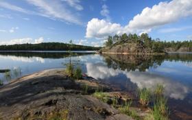 Картинка лес, небо, облака, деревья, природа, река, камни