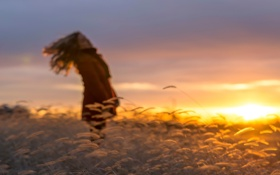 Картинка поле, трава, девушка, солнце, силуэт