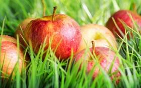 Картинка яблоки, урожай, травка