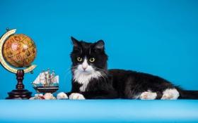 Обои кошка, Кот, кораблик, глобус, cat, голубой фон