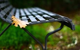 Обои листья, макро, скамейка, желтый, фон, обои, размытие