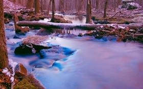 Обои лед, лес, снег, деревья, река, камни, поток