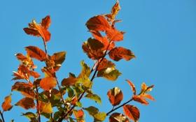 Обои осень, небо, листья, краски, ветка