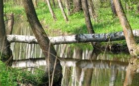 Обои природа, река, красота