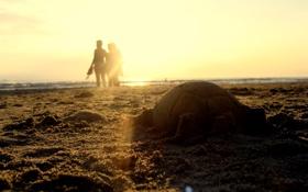 Обои песок, море, солнце