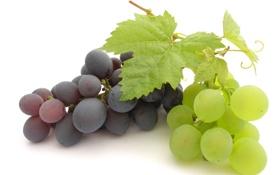 Картинка белый, листья, черный, виноград