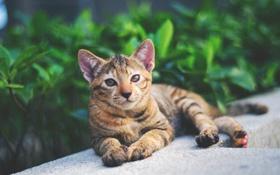 Картинка животное, Кошка, cat