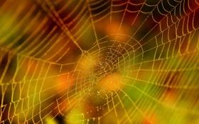 Обои краски, ярко, осенью, паутинка, росинки