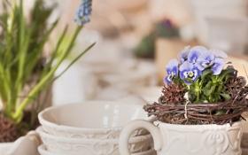 Обои цветы, веточки, виола, горшочки, миски