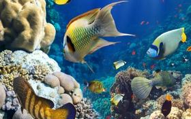 Обои рыбы, кораллы, подводный мир, под водой
