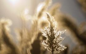 Обои поле, лето, солнце, свет, обои, картинки, растения