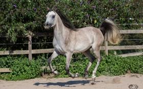 Обои (с) OliverSeitz, галоп, хвост, загон, бег, движение, серый
