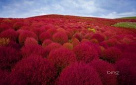 Картинка осень, лес, небо, деревья, пейзаж, холмы, багрянец