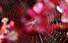 Обои свет, природа, паутина, паук