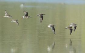 Обои отражение, вода, птицы