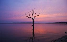Обои небо, закат, озеро, дерево, сухое