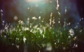 Обои пух, трава, свет