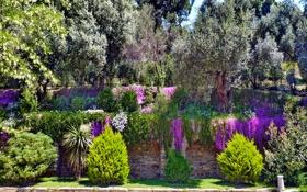 Обои кусты, деревья, Izmir, Турция, парк, цветы