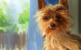 Обои арт, KingCloud, взгляд, собака
