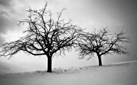 Картинка холод, зима, небо, снег, деревья, ветви, сумрак