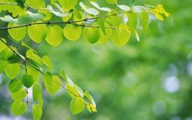 Обои зелень, листья, макро, природа, дерево, настроение, ветка