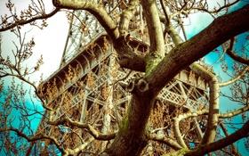 Картинка небо, ветки, дерево, Франция, Париж, Эйфелева башня, Paris
