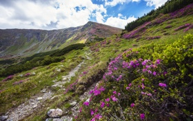 Картинка пейзаж, цветы, природа, холмы, тропа, Горы, кусты