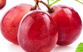 Обои макро, красный, ягоды, berry, виноград, red, macro