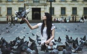 Обои голуби, девушка, улица