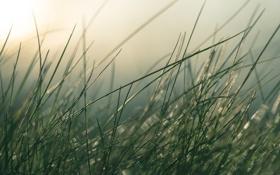 Обои трава, солнце, стебли