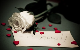 Картинка макро, цветы, настроение, роза