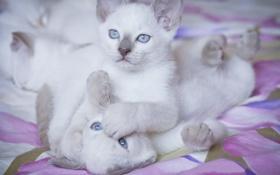 Обои игра, котята, друзья
