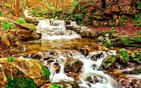 Картинка осень, лес, листья, деревья, ручей, камни, мох