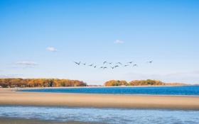 Картинка осень, пляж, птицы, берег, Нью-Йорк, New York, Бронкс