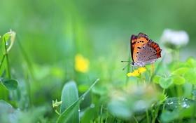 Обои трава, капли, цветы, бабочка, метелик
